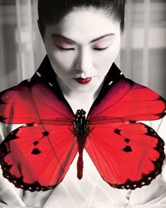 madama-butterfly-TNOB.jpg