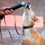 animalele-au-talent