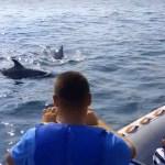 delfini-marea-neagra-2