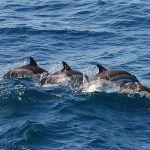 pe urmele delfinilor