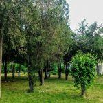spatii-verde-aurel-vlaicu-1280x640