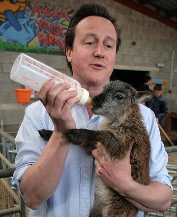 David Cameron rearing sheep