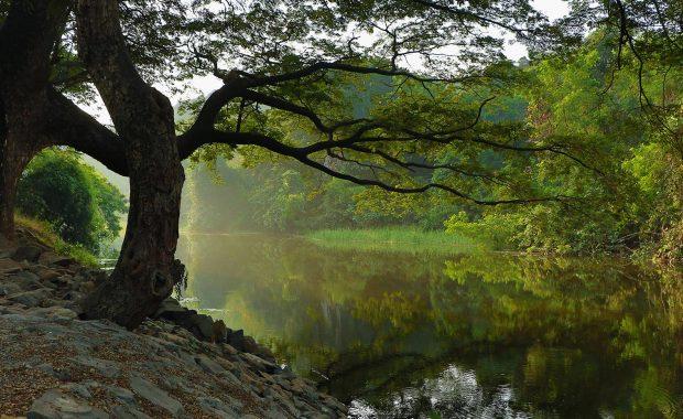 corso-PRATICO-arboricoltura