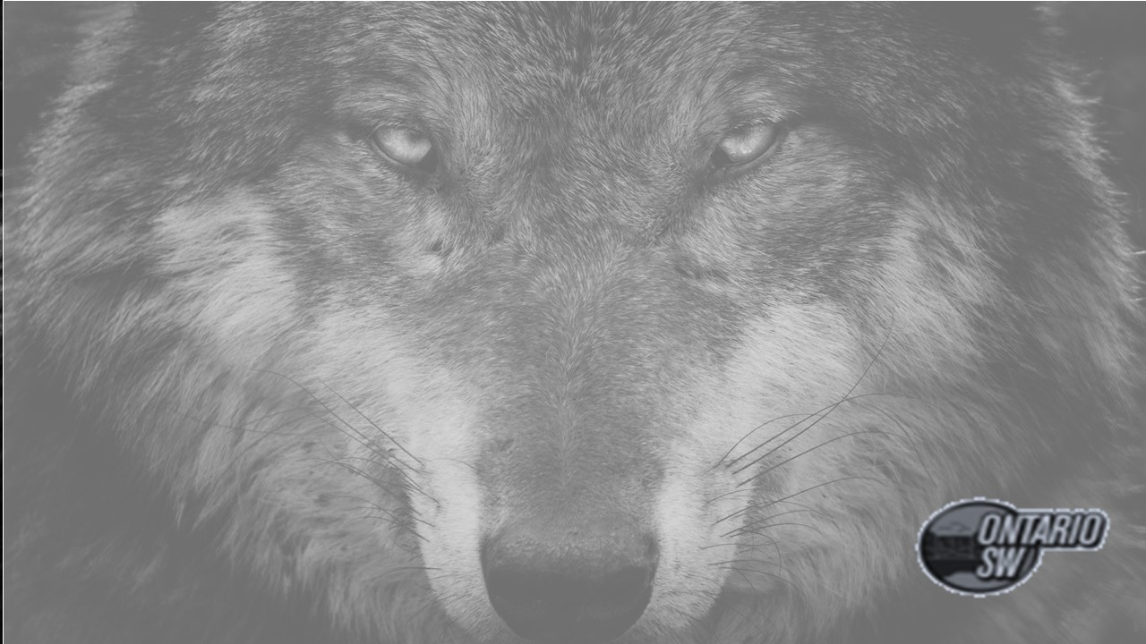 SW Wolves - ZOOM background