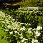 white flowering plants displays event plants hire melbourne