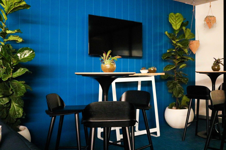 Fiddle leaf figs succulents terrarium event plants melbourne hire