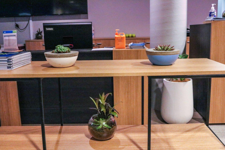 event plants melbourne hire Succulents pots terrarium