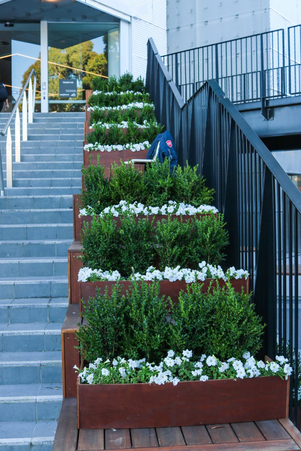Stair petunia buxus edging