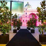 magnolias in black pots at melbourne museum event plants
