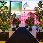 magnolias in black pots at melbourne museum event plants