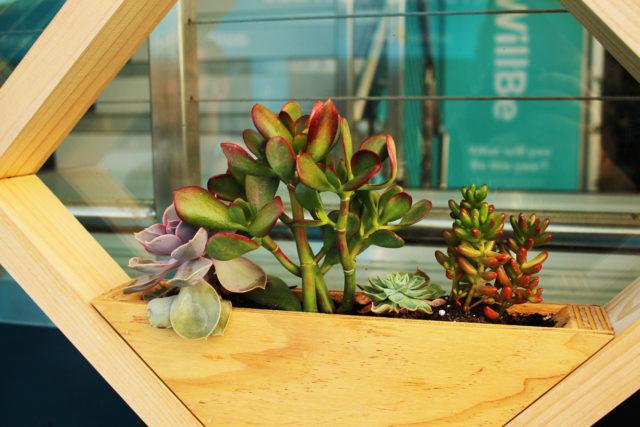 succulents display event plants hire melbourne