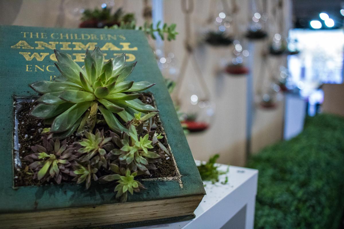 Succulent Table center Event Plants Hire Melbourne
