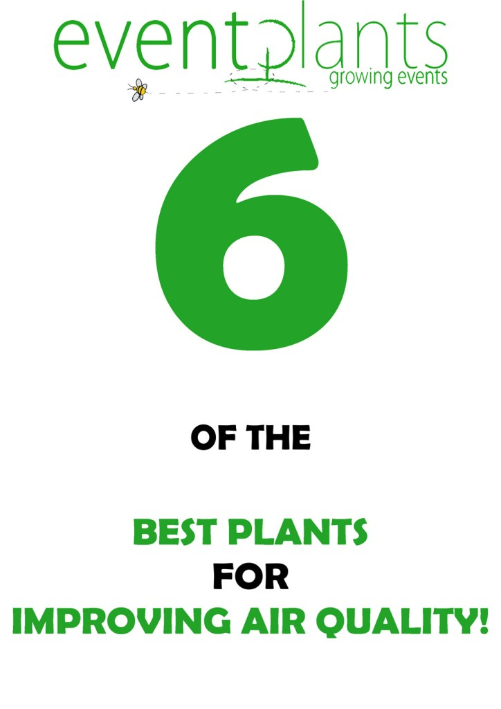 6 of the best plants for improving air quality