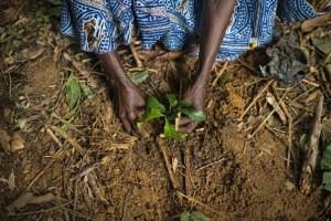 Close up hands planting seedling - Restoration