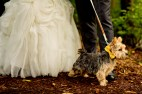 Events by L Real Wedding, Algonquin, Illinois