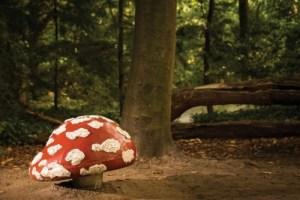 500_efteling-paddenstoel-306919