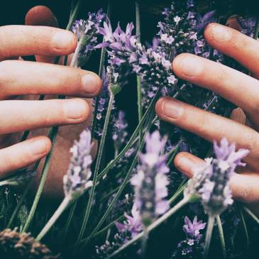 How to make organic lavender body powder
