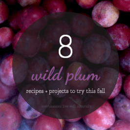 it's the plums that are wild, not the projects and recipes.