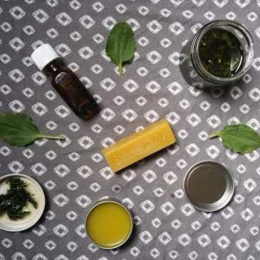 An Easy Plantain Salve Recipe (and why you need it!)