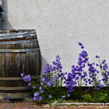 How to Reuse Water in Your Garden