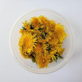 Bowl of freshly picked dandelion heads.