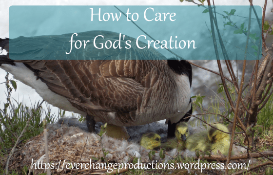 How to Care for God's Creation