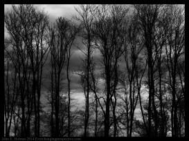 140504-145223_Trees-Edit
