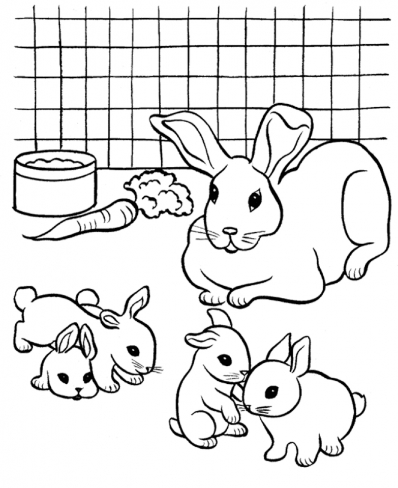 Online Printable Rabbit Coloring Pages   4G45S
