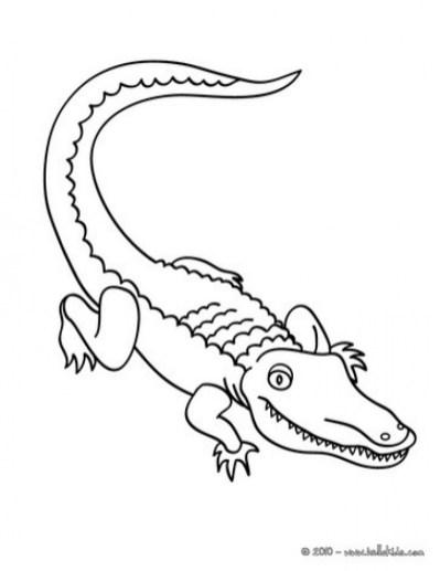 Easy Preschool Printable of Alligator Coloring Pages qov5f