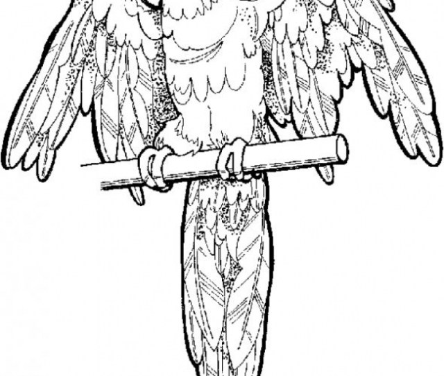 Get This Free Parrot Coloring Pages To Print