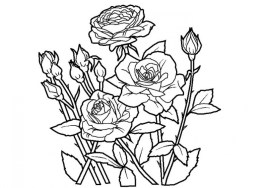 Free Roses Coloring Pages for Adults to Print 16629