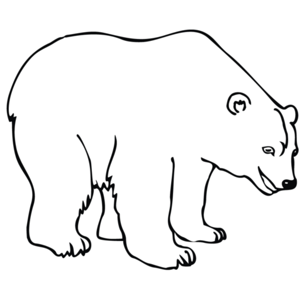 Image of Polar Bear Coloring Pages to Print for Kids   uan64