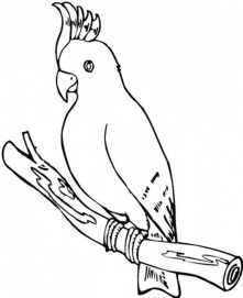 Parrot Coloring Pages Free Printable 75185