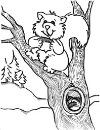 Printable Image of Squirrel Coloring Pages t2o1m