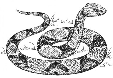 Free Snake Coloring Pages 07599