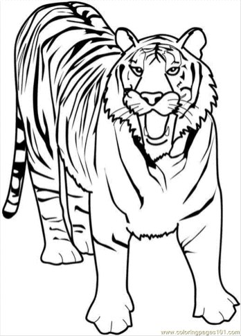 Tiger Coloring Pages to Print for Free - 90316