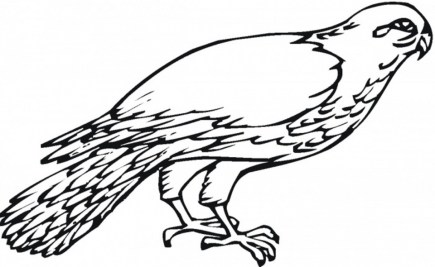 Bird Coloring Pages Free Online 67581