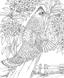Difficult Adult Coloring Pages to Print Out 67341