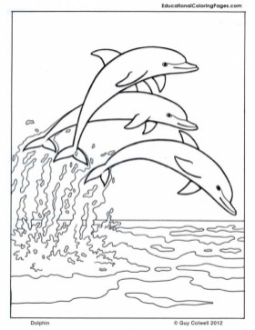 Dolphin Coloring Pages to Print Out 31634