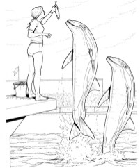 Free Printable Dolphin Coloring Pages for Kids 63519