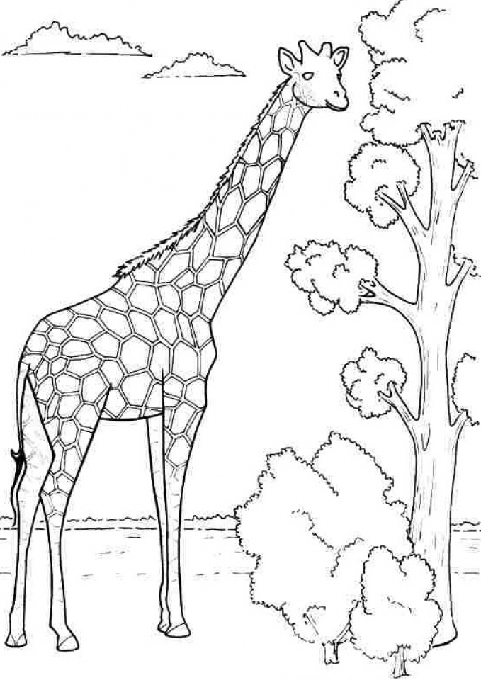 Get This Giraffe Coloring Pages Free Printable 76649