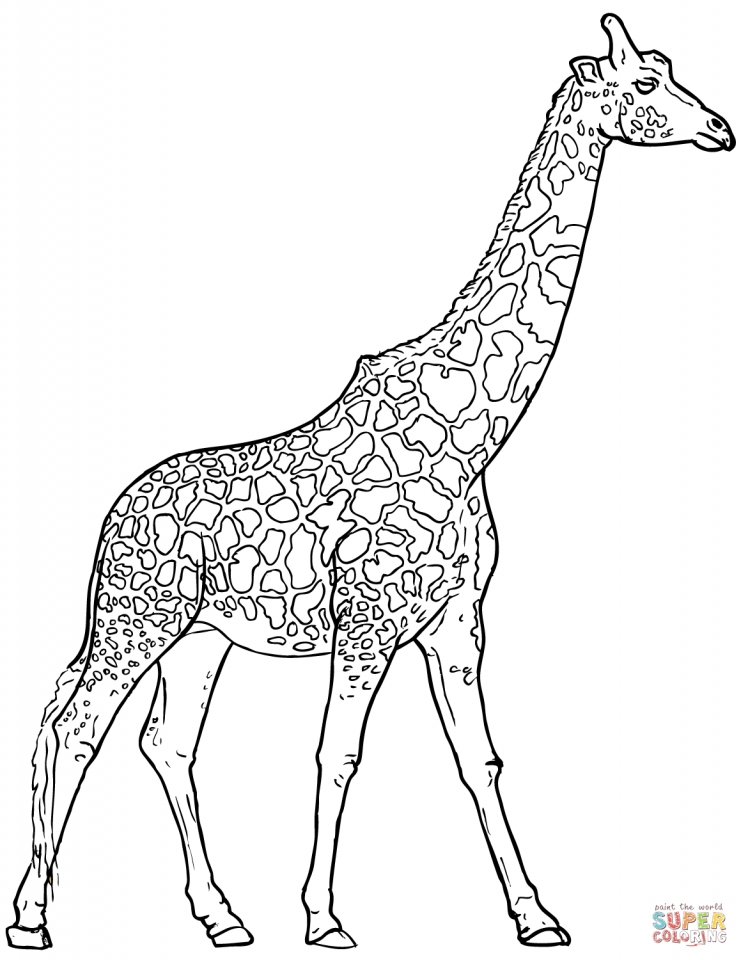 Giraffe Coloring Pages Realistic Animals   53182