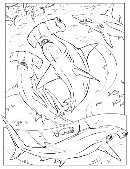 Hammerhead Shark Coloring Pages 88410