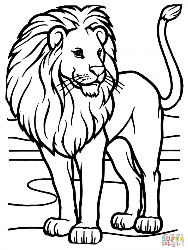 Lion Coloring Pages Free Printable   52258