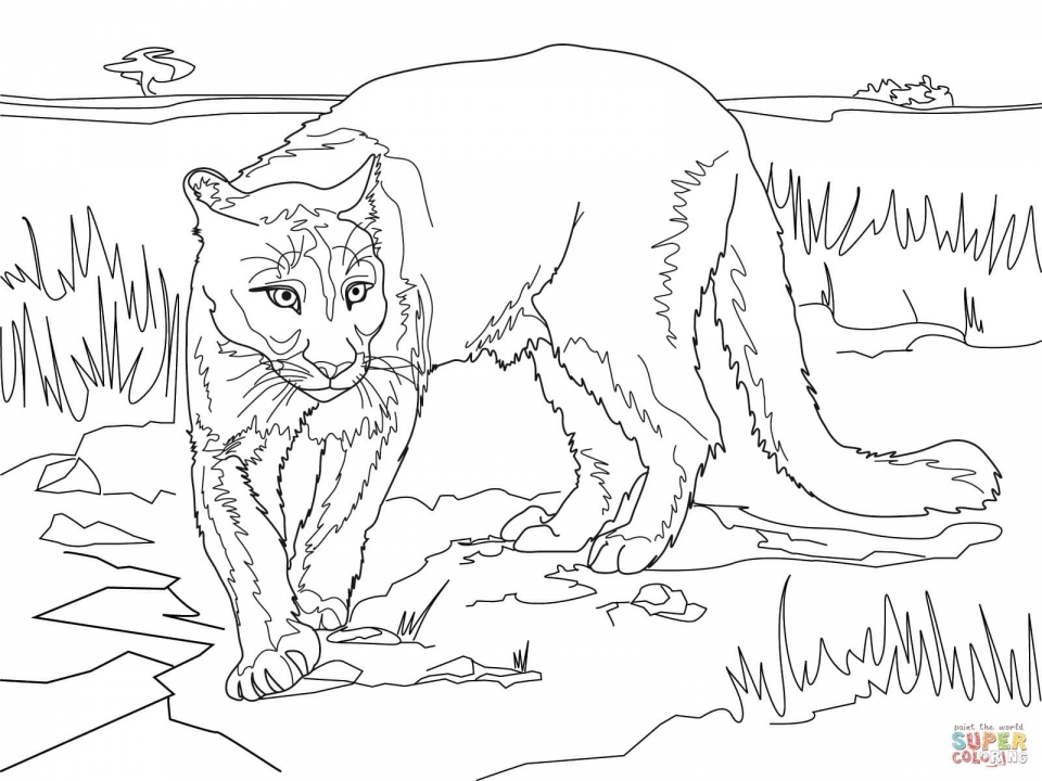 Mountain Lion Coloring Pages Printable   56265