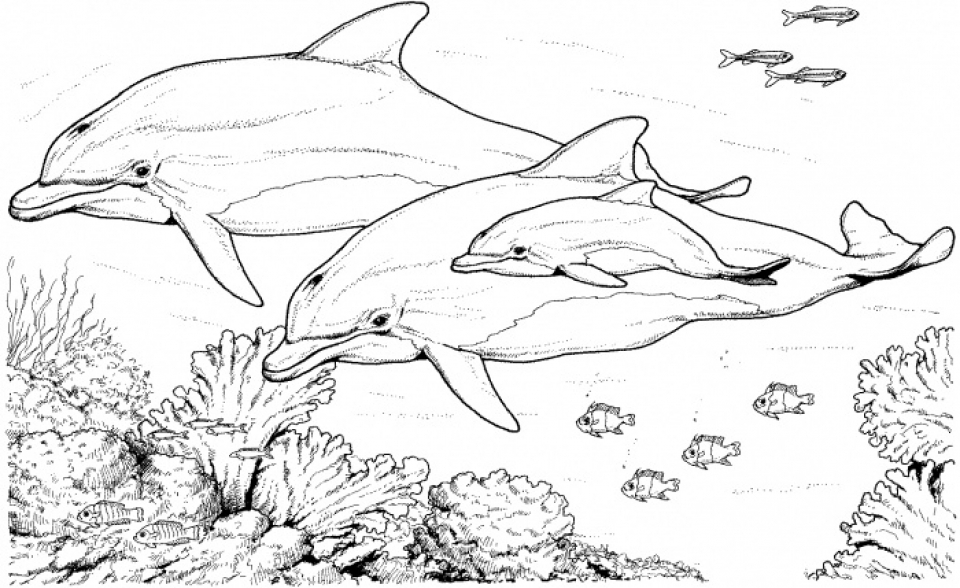 Printable Dolphin Coloring Pages   31792