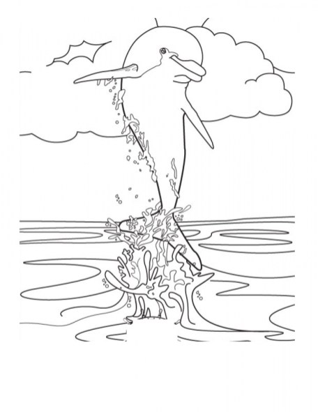 Sea Animals Dolphin Coloring Pages 47192