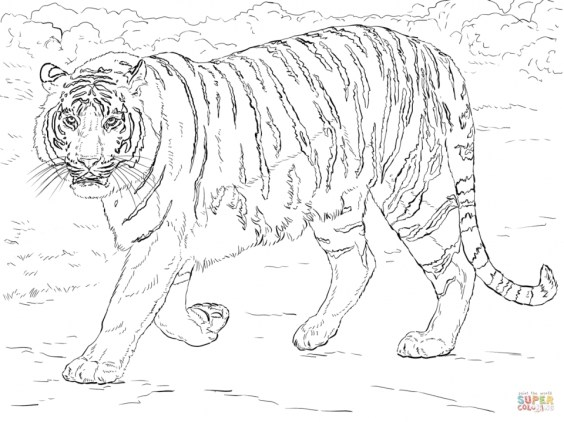 Tiger Coloring Pages for Adults 97654