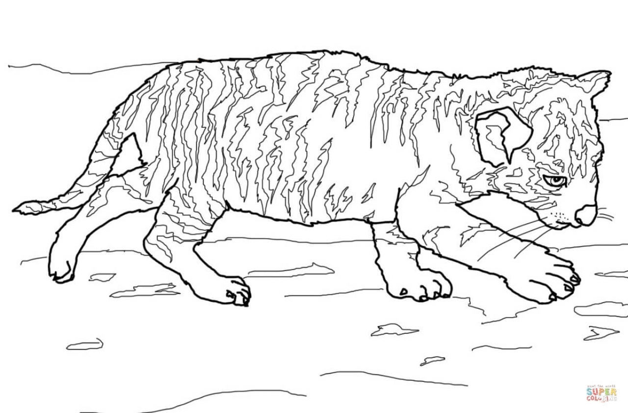Get This Tiger Coloring Pages For Older Kids