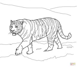 Tiger Coloring Pages Realistic Animal Printables for Adults 41782